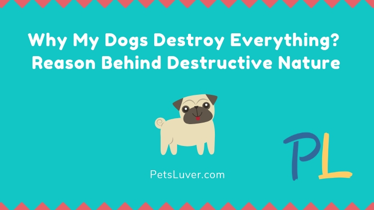 Why My Dogs Destroy Everything Reason Behind Destructive Nature