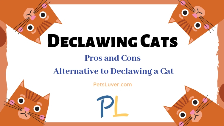 Declawing Cats Pros and Cons_ Alternative to Declawing a Cat